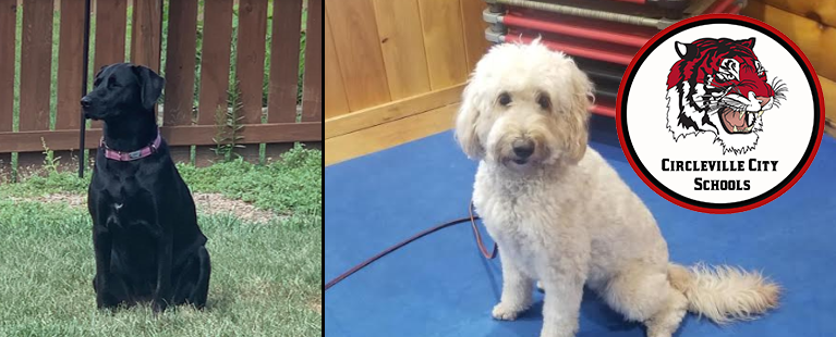 Meet Bailey and Bayley! ?? Circleville City is excited to announce the start of a new therapy dog program at Circleville Elementary School in 2020 as a part of our district health and wellness programming.